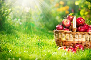 Fresh Apples on lawn