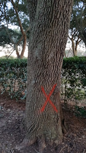 Tree with X
