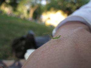 Arm and Bug