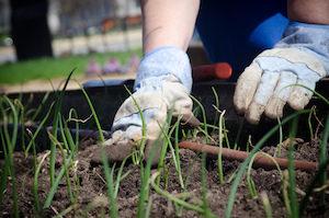 Hands in a Garden