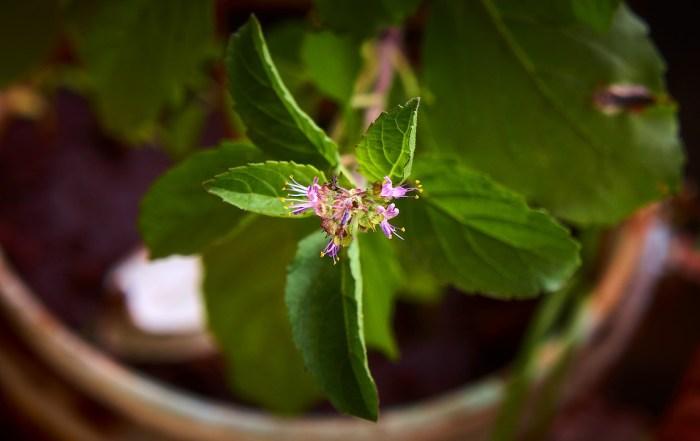 India Macro Nature Plant Green  - sutejarts / Pixabay