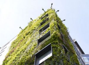 living-wall-athenaeum-hotel-london