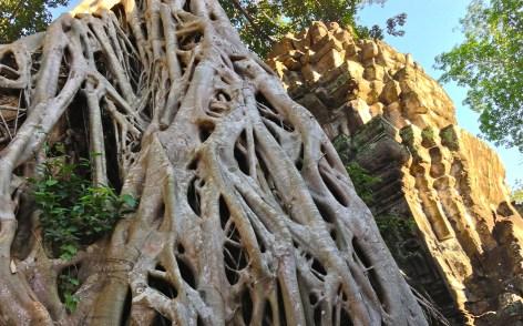 ta prohm banyan roots