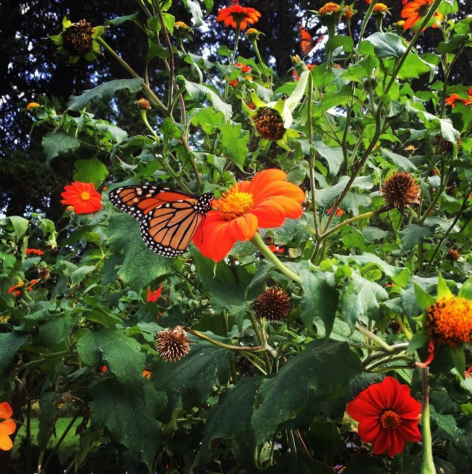 Monarchs of Autumn