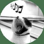 Chat qui chante