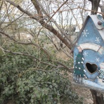 Springs Preserve February 2012 432