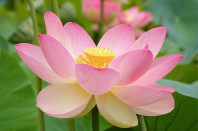 meditazione guidata a brescia