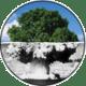michele svanera