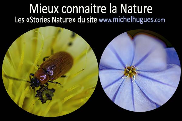 """""""Mieux Connaitre la Nature"""" : les stories-Nature du site www.michelhugues.com"""