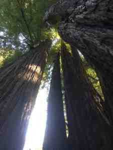 Redwood and Sequoia National Parks
