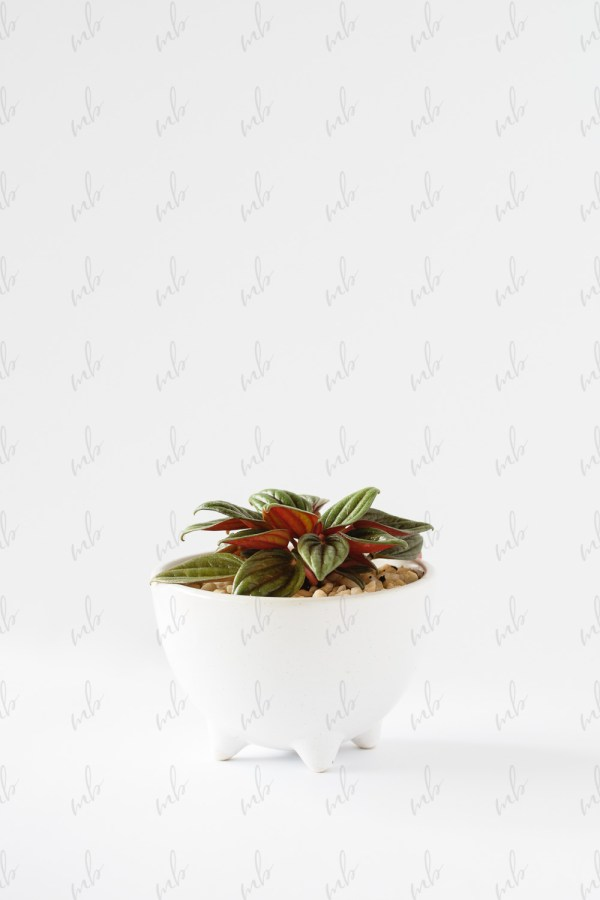 Styled Stock Photography - Succulent MB236