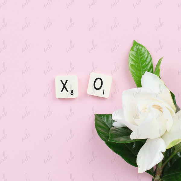Valentine's Day stock photo - XO written in scrabble tiles on a pink background with a gardenia flower