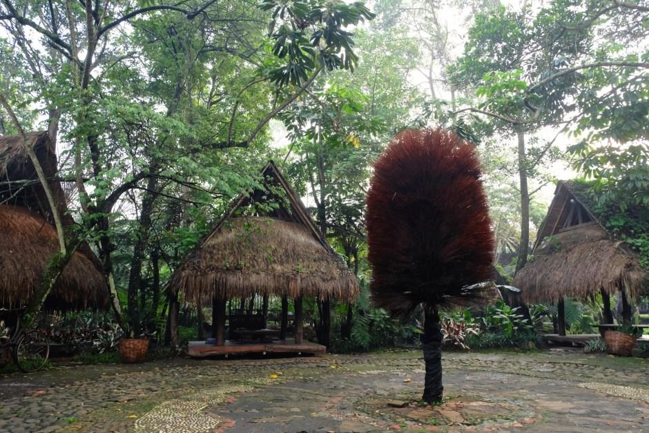 Sapu lidi Tree