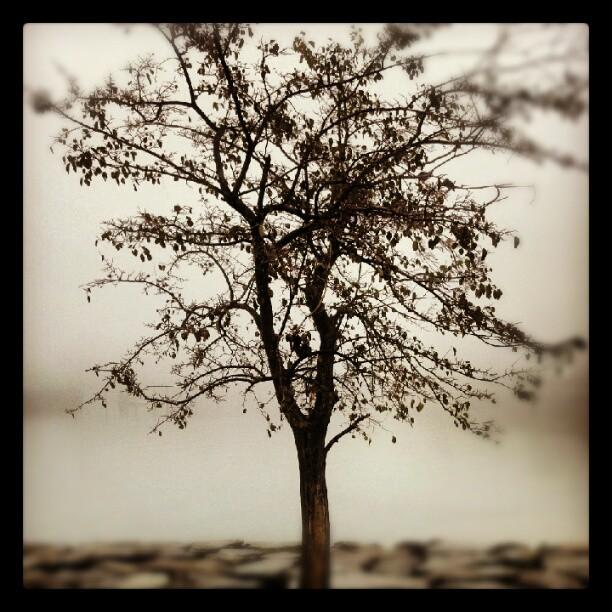 Stillness #fog #tree #nature #NYC  #Bayside #forttotten #bleak
