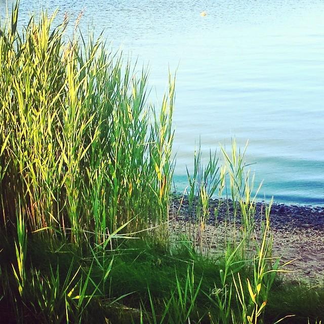 Tiana Bay Sunset #hamptonbays #hamptons #longisland #water #seascape #landscape