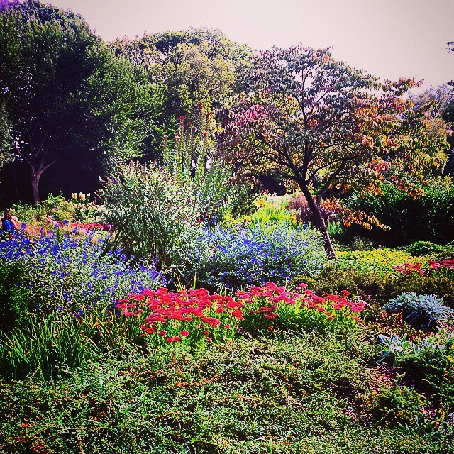 Heather Garden #washingtonheights #pretty #flowers #floral #color #nyc