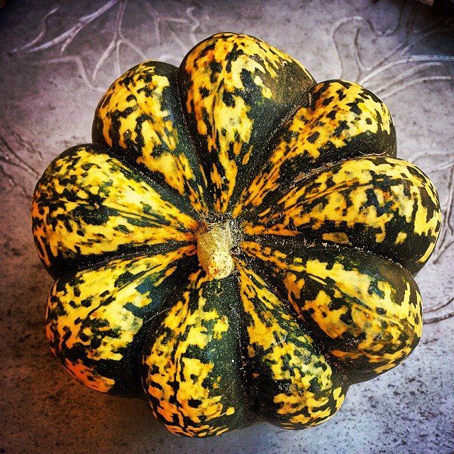 Gourd #fall #squash #vegetable #green yellow#gold
