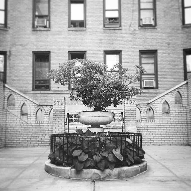 Courtyard, Washington Heights #washingtonheightsny #architecture #photography #citylife