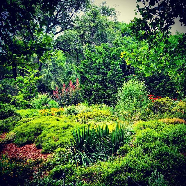 Heather Garden on a #Summer #Sunday #washingtonheightsny #forttryonparktrust #forttryonpark