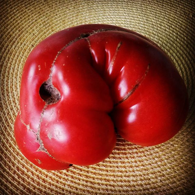 Twisted Tomato #uglyfood #Tomato #foodporn #weird #warped #strangefruit