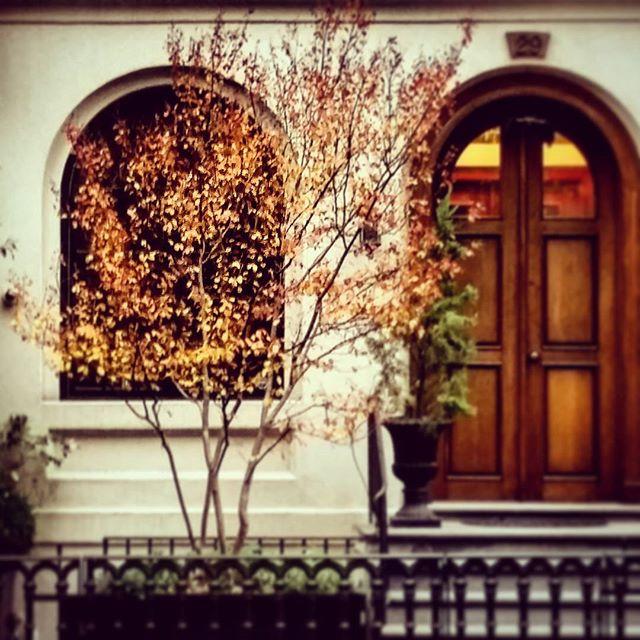 Fall In New York #NYC #foliage #autumn #cityscape #greenwichvillage #orange