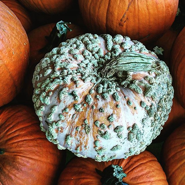 Think Different #latergram #pumpkin #latefall #autumninny #gourd