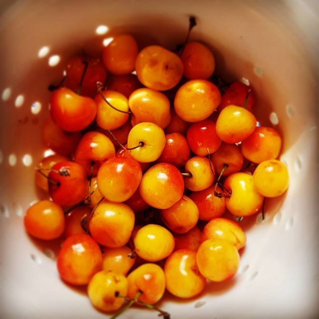 Life Is A Bowl Of Cherries #stonefruitseason #whitecherries #foodporn #delicious #summertreats #yum