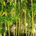 It's Okay to Feel Like a Bamboo Tree