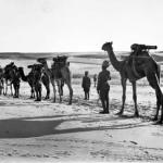 The Imperial Camel Corps