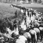 World War I Animals: Horses
