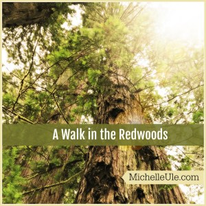 redwoods, Prairie Creek Redwoods State Park, banana slugs, redwood tree facts, black bear, forest mushrooms, elk, squirrels, outdoor education