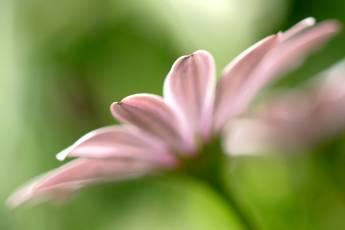 mp-plants-000123