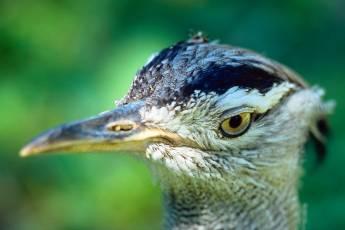 mp-bird-ibis-003-10