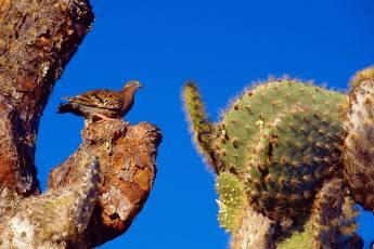 mp-bird-sparrow-001-19