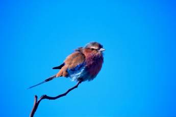 mp-bird-sparrow-002-08