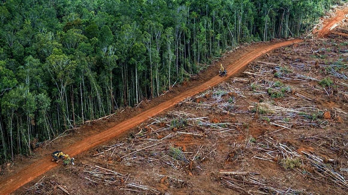 Il disboscamento della foresta amazzonica