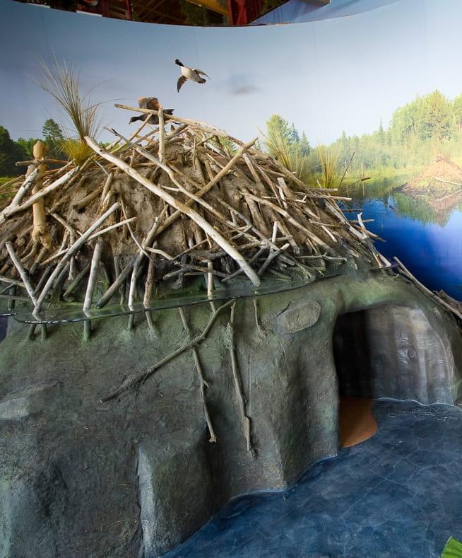 DNR Outdoor Adventure Center  Beaver Lodge and Wetland