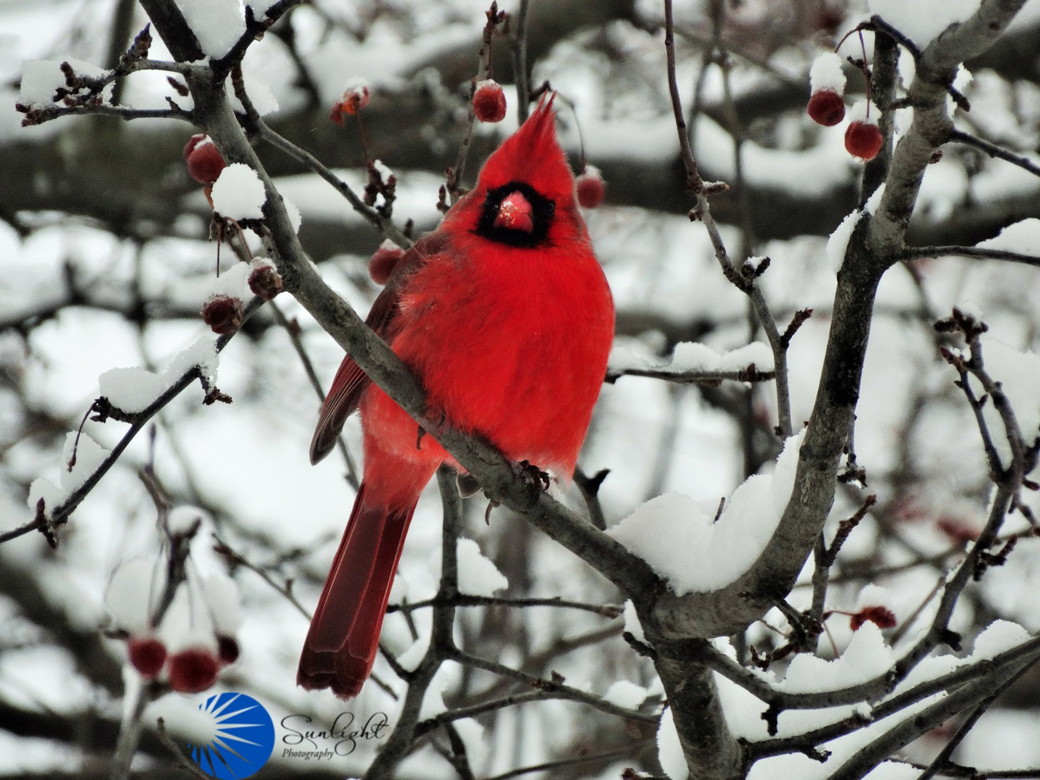 Fall Bird Wallpaper Trails And Sanctuaries Perfect For Bird Watching In