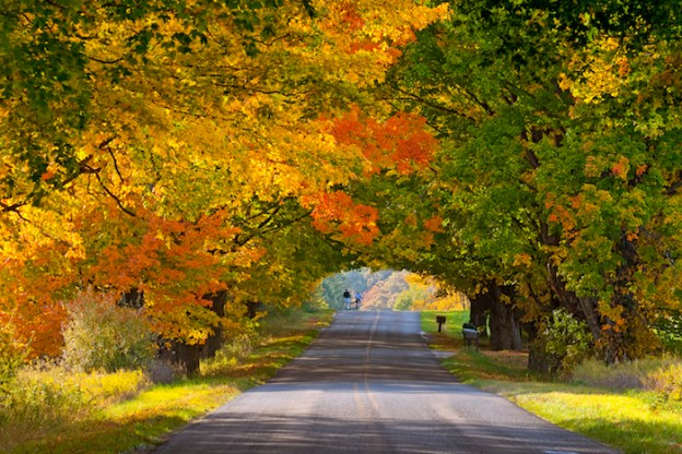Tunnel of Trees in Fall