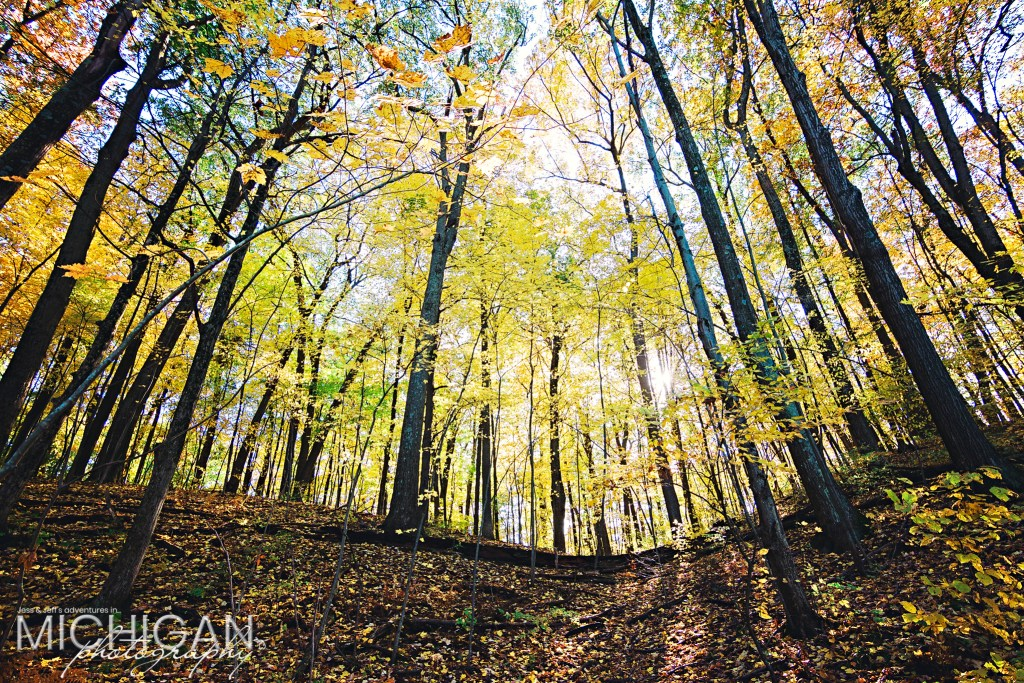 Beautiful autumn yellow forest on the Wildwood & Valley Lake Loop