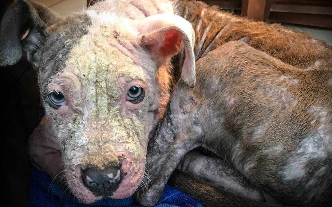 MHS CEO: Mandatory Spay and Neuter of Dogs in Detroit Will Only Compound the Problem