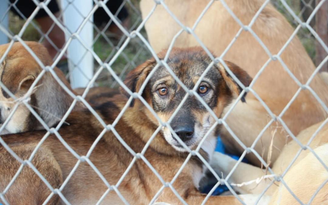 Dogs inside a kennel.