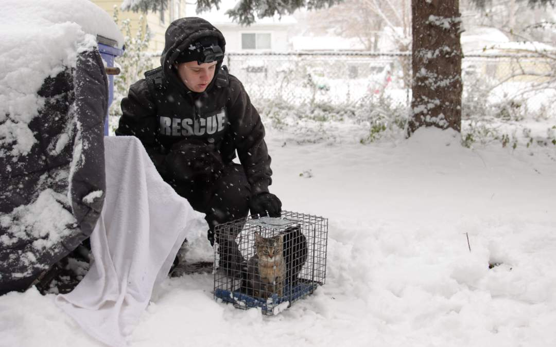 Winter Rescues at Michigan Humane