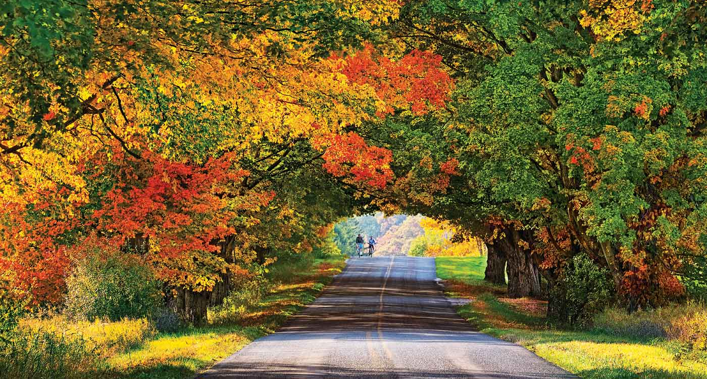 Pure Michigan Fall Wallpaper Places To Go Tunnel Of Trees Michigan Overland