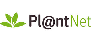 Plantnet: The App Every Forager Should Have