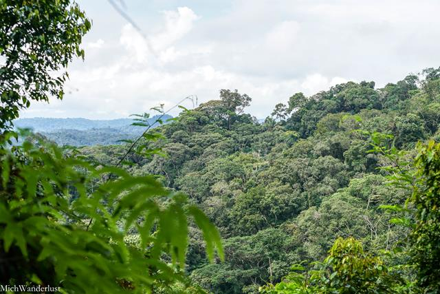 5 Reasons You Should Visit the Ecuadorean Amazon, via MichWanderlust on #TheWeeklyPostcard