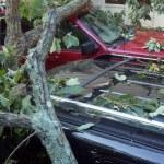 Tree on cars