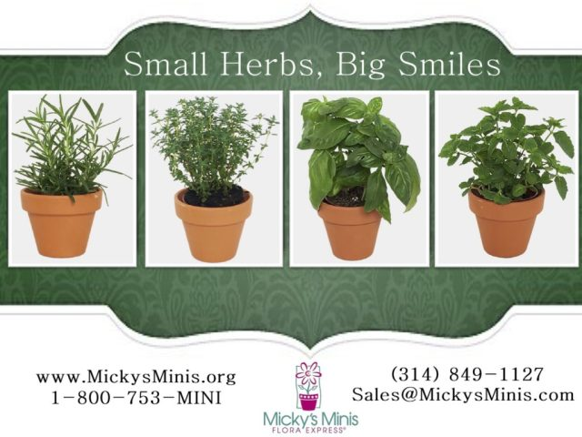 small-herbs-big-flavor