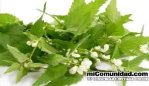 Plantas-medicinales-y-para-que-sirven
