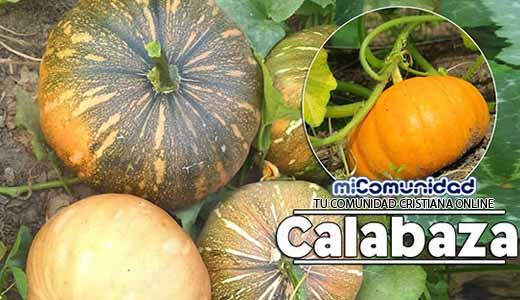 Propiedades Curativas Y Medicinales De La Calabaza